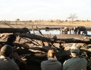 Camp Hwange offers excellent Close-Up Game Viewing from its Hide at the Waterhole in Hwange National Park, Zimbabwe.