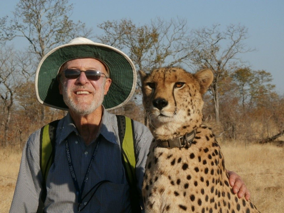Mike Grenby getting close with Sylvester the Cheetah - The Author loves Zimbabwe, as it is one of the best Safari Destinations in Africa.