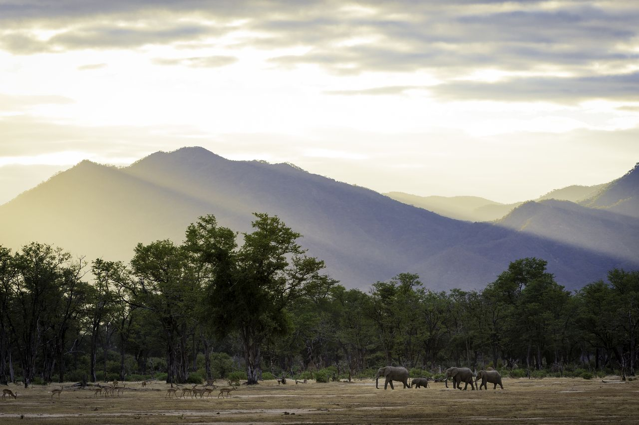 Mana Pools & Lower Zambezi National Park, Ruckomechi Camp, Zimbabwe
