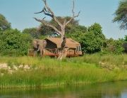 CampSavuti_RoomExternalElephant