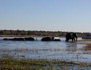 Chobe & Kasane National Park Botswana