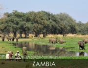 Zambia - Walking Safari