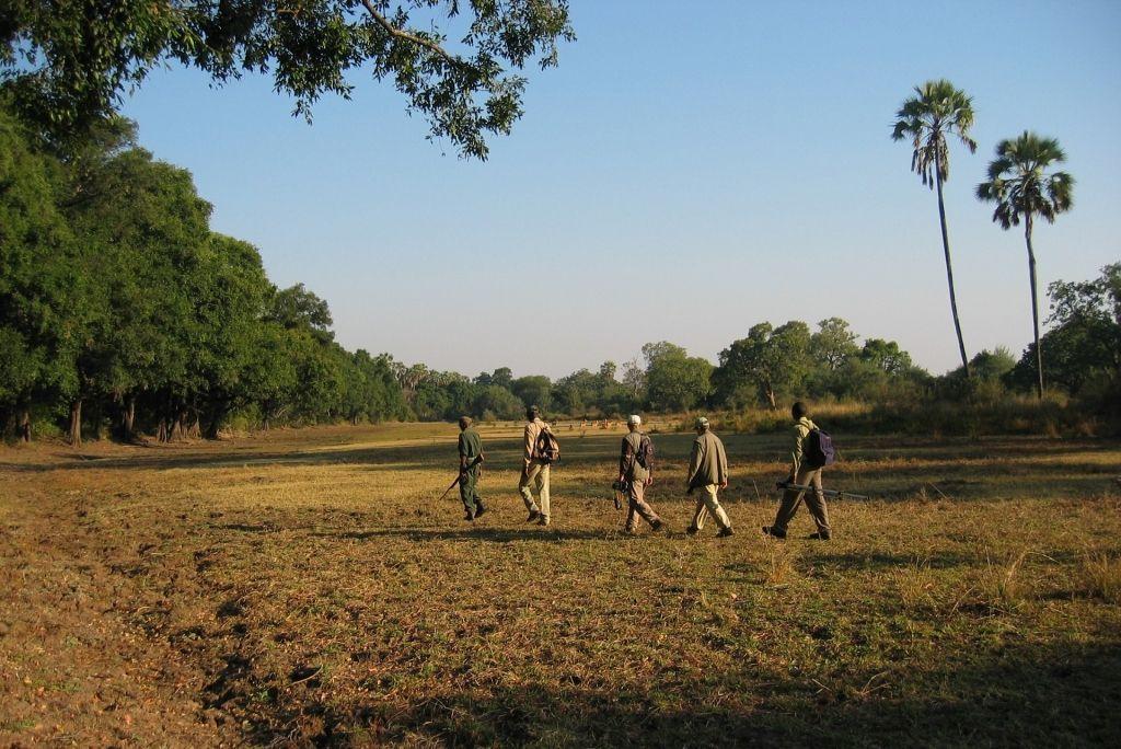 Walking Safari, Guide with Guests exploring South Luangwa, Kafunta River Lodge