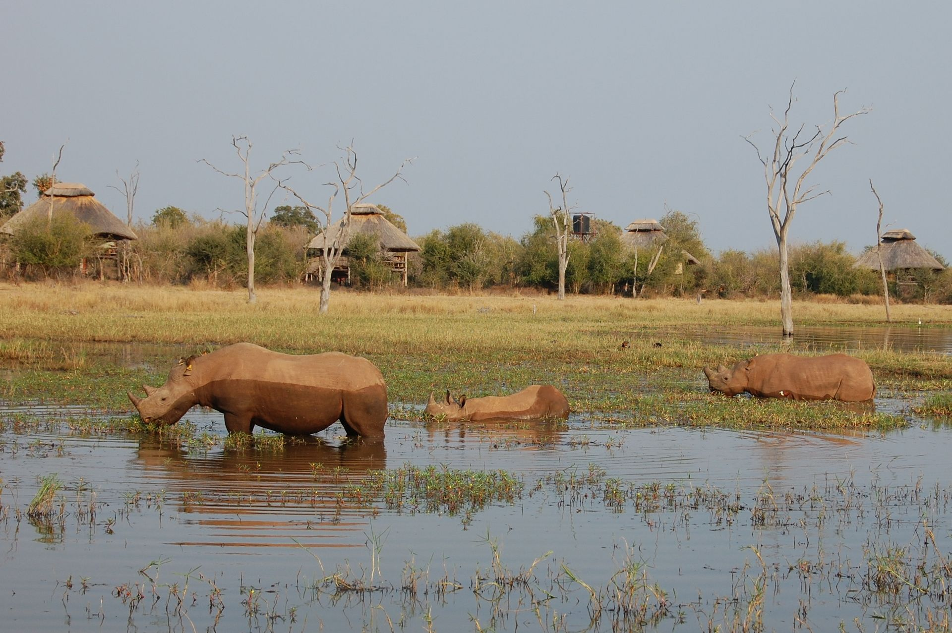 Lake Kariba & Matusadona National Park, Rhino Safari Camp, Zimbabwe