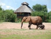 Rhino Safari Camp near the Lake Kariba in Matusadona National Park offers great authentic Safari Experiences in southern Africa, Zimbabwe.