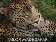 Tailor-Made Safaris to tailor your dreams & expectations