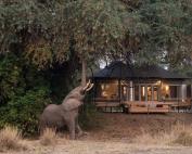 chikwenya_wildlife_2000px_-_kyle_and_ruth_234_of_334