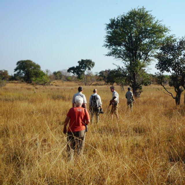 Bushwalks at Mawimbi!