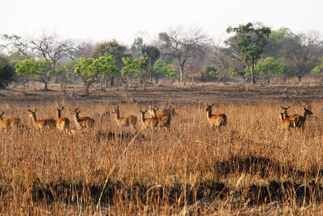 Wildlife at Mawimbi