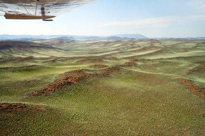 Namib Wüste, Namibia, nach dem Regen grüne Wüste, Eric Paul, Travelbook