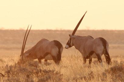 Onyx in Namibia bei Sonnenuntergang, Namibia, Eric Paul