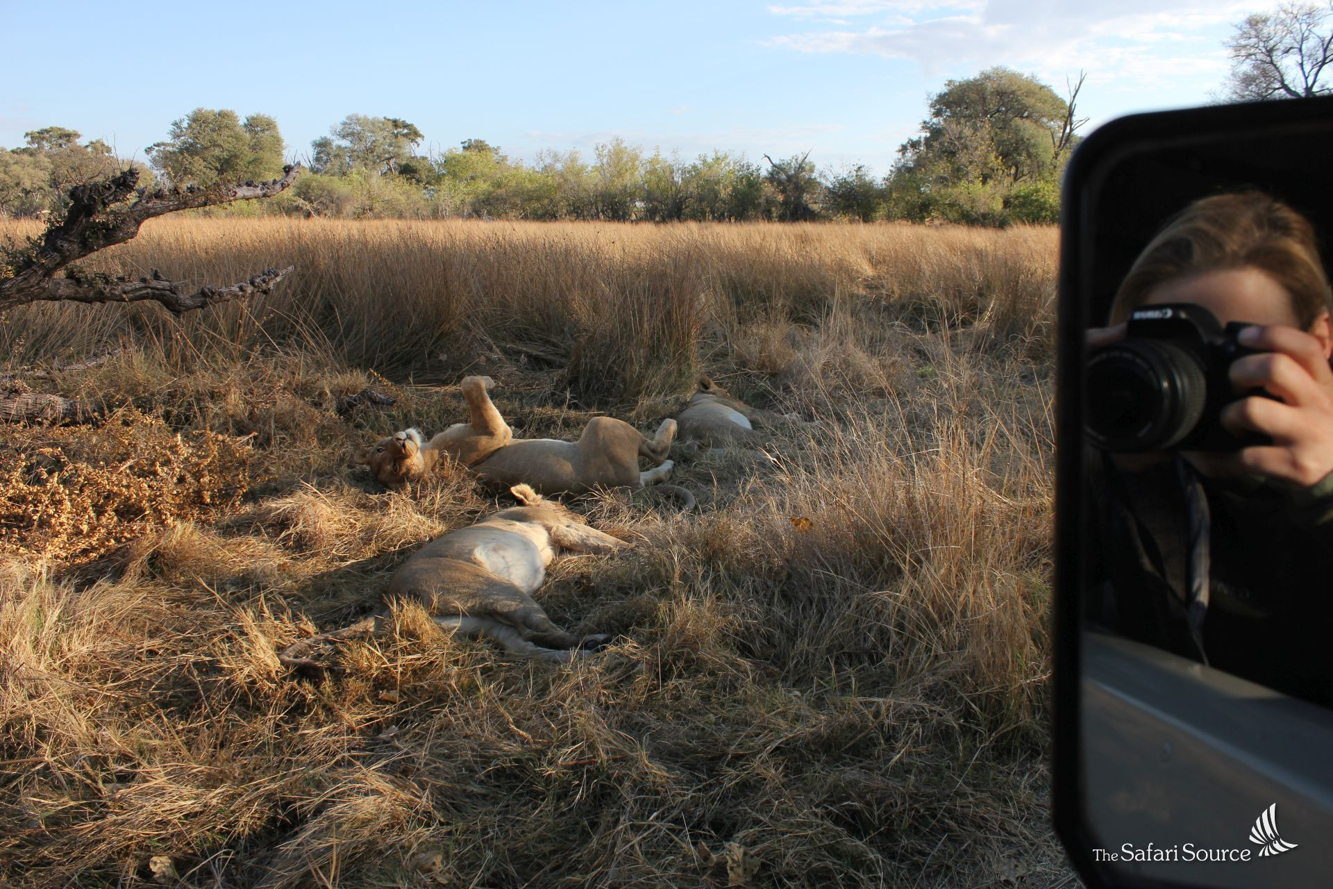 Lion sighting on Safari in the Moremi Game Reserve, Khwai, Botswana, Game Drive, Lioness Sleeping, Miriam Reiter Taking a picture, The Safari Source