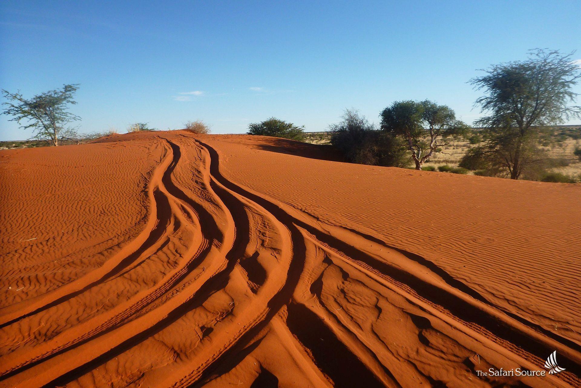 Blog_TSS_AdventureSafaris_Namibia_OffRoadningSand