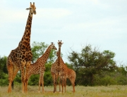 A Safari through Botswana, Namibia and Zimbabwe, Jenman Safaris, Botswana Breakaway, Group Safari, Set Departures.