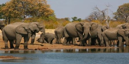 Family Safari in Zimbabwe, Excellent offers for families in Victoria Falls, Gonarezhou, Lake Kariba, Mutare, Eastern Highlands, Africa.