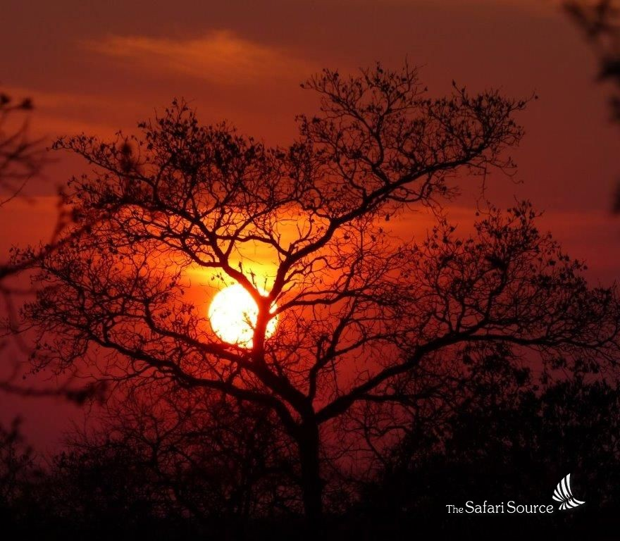 Why does the sun turn red at sunset? Read more about the natural phenomenon in our blog, The Safari Source.
