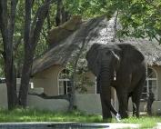 Gwango Elephant Lodge, Chalet and Elephant, Zimbabwe