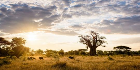 Pamushana Lodge Wildlife.  Malilangwe Reserve, Chiredzi, Zimbabwe.