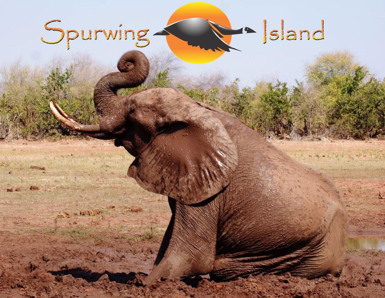 Elephant at Spurwing Island, Lake Kariba