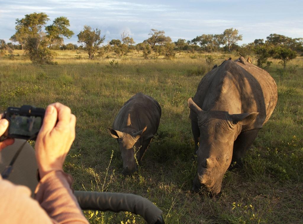 Rhino, one of the big 5.