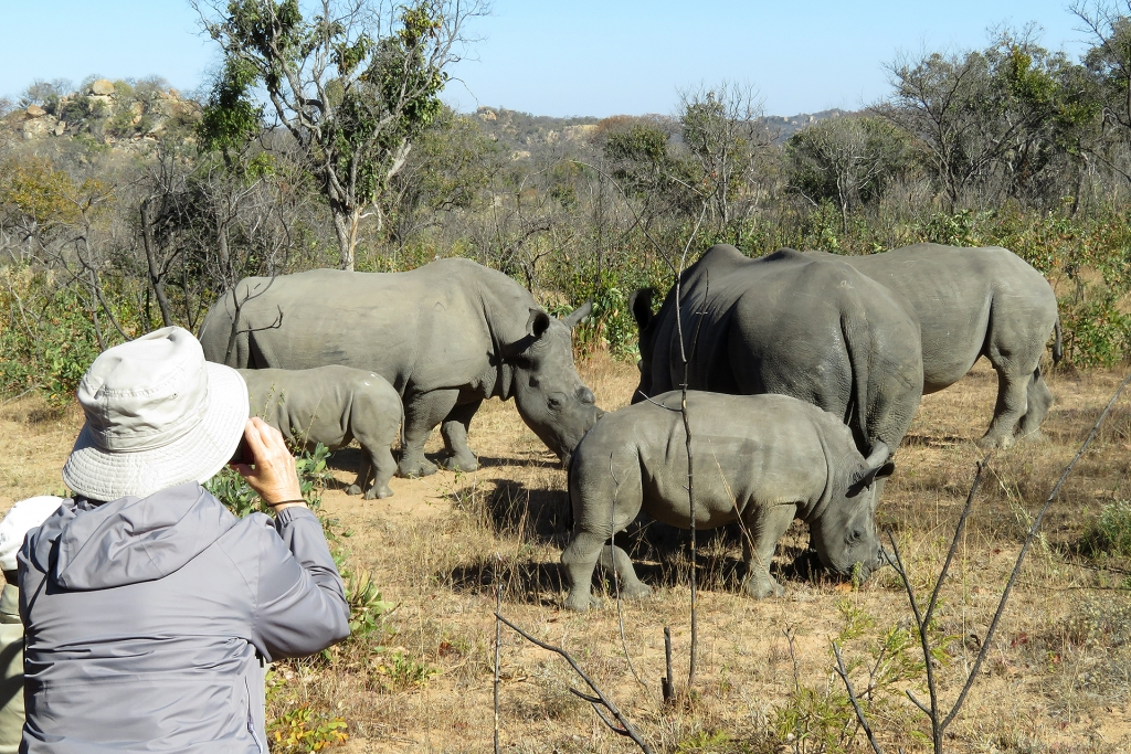 Powells on a rhino walk in Matopos National Park, Zimbabwe.