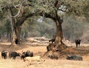 Mwinilunga Wildlife